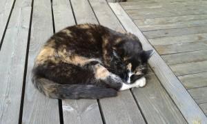 Kannatatko kissan vapaata ulkoilua?, Takuuvarma vihapostin aihe.